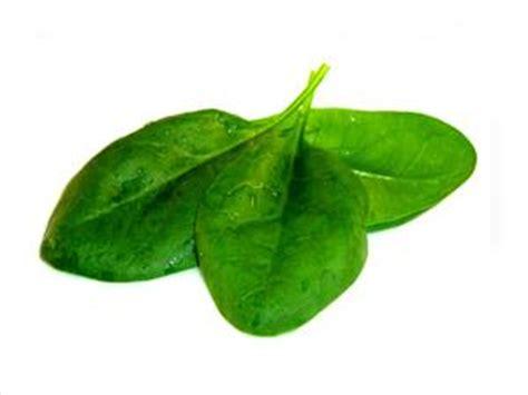 alimenti ricchi di ossalati gli alimenti che inibiscono ferro russelmobley