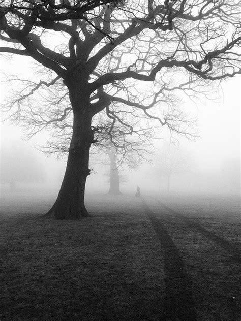 Trees Mist Fog · Free photo on Pixabay