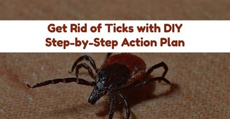 how do you get a tick a how do i get rid of ticks in my yard better