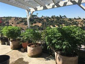 outdoor grow light stealth ideas for growing marijuana in your yard or