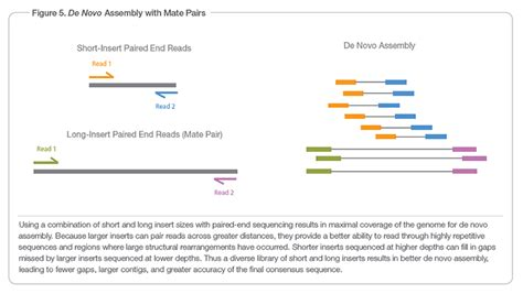 illumina sequencing protocol mate pair sequencing