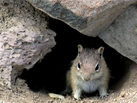 chipmunk in house chipmunk house 28 images free stock photos rgbstock free stock images my chippie