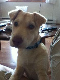 shar pei pomeranian mix mix puppy for adoption in allentown pennsylvania osbourn bed mattress sale
