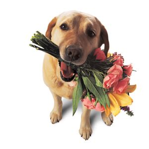 dogs with flowers ordinary time