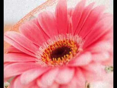 concato fiori di maggio fiore di maggio fabio concato con la figlia carlotta