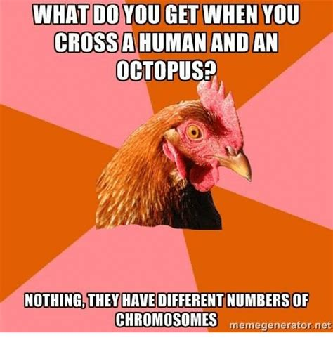 Octopus Meme - octopus meme 28 images octopus lungs hurt