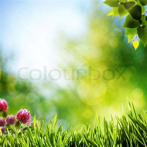 art abstract natural backgrounds  beauty bokeh stock