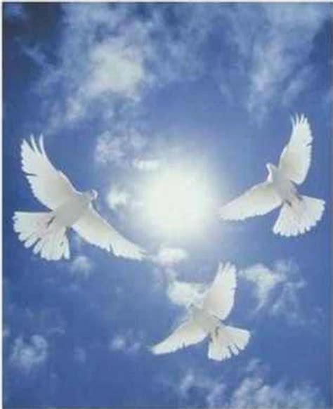 imagenes palomas blancas volando imagenes de palomas blancas imagui