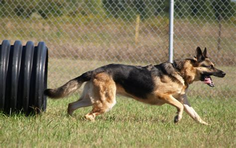 k 9 dogs plans for k 9 unit on hold