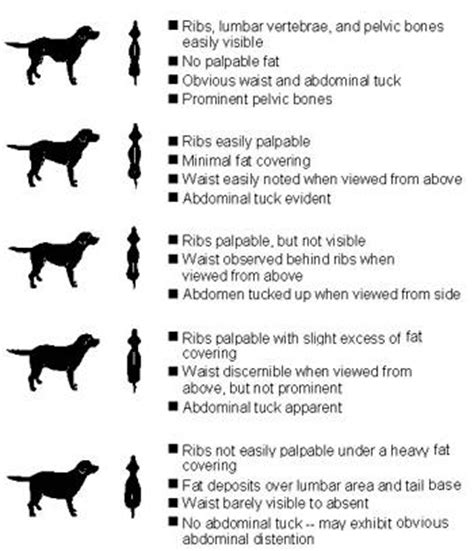 weight management guidelines for dogs and cats daily caloric needs for average indoor pets