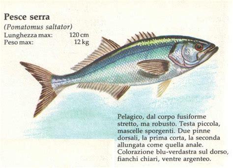 cucinare il pesce serra pesca in apnea tecniche la pesca pesce serra