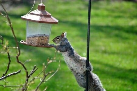 how to keep squirrels out of bird feeders memphis tn