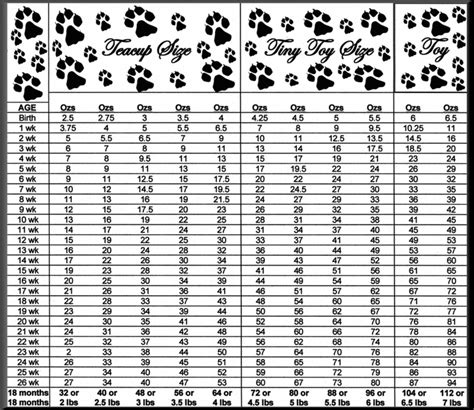 pomeranian weight puppy weight chart pomeranian chihuahua weight chart and growth chart pet it