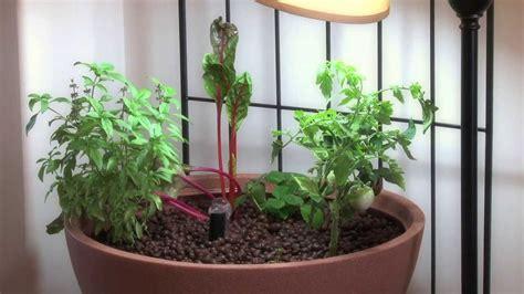 small aquaponic indoor  patio mini garden youtube