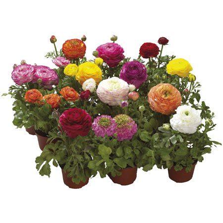 fiori in balcone fiori da balcone consigli pratici per un balcone fiorito