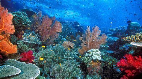 Paket Wisata Pulau Weh Sabang Aceh Pesona Indonesia