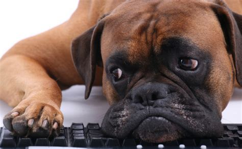 craigslist puppy scams how to protect your pup from the craigslist flipping scam