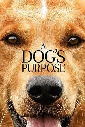 a s purpose summary a s purpose for rent other new releases on dvd at redbox