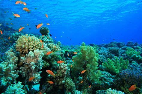 dive dahab diving alaska c hotel dahab
