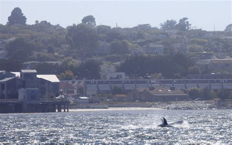 Hoodie Natgeo Brain killer whale