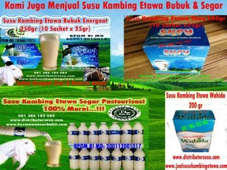 Kambing Murni Energoat pusat kambing etawa medan merk energoat skey skygoat