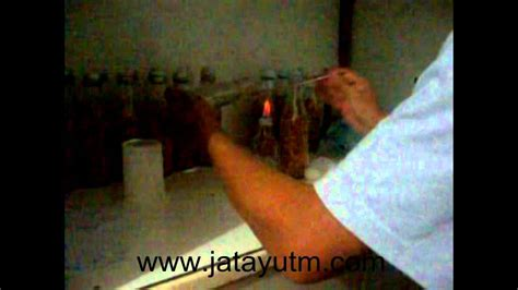 Bibit Jamur Tiram Bogor pembuatan bibit jamur tiram konsumsi f1 ipb bogor