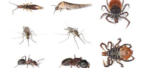 pest problem starbound house fly infestation in loft