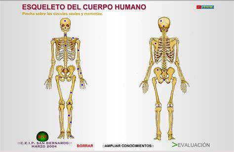 imagenes de los nombres del cuerpo humano en ingles la mina 3 186 de primaria el aparato locomotor el