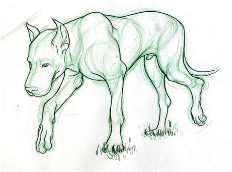 Drawings Of Animals by Gallery Really Drawings Of Animals