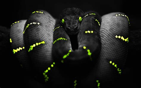 themes in black mamba wallpaper black and yellow snake