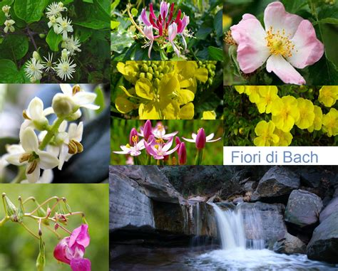 fiori fi bach fiori di bach l arte comunicare 174