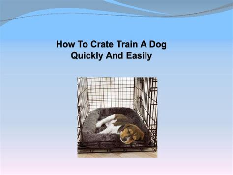 how to crate a puppy how to crate a quickly and easily