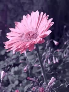 flower photography flower photography photo 34190878 fanpop