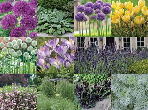 Longfield Gardens by How To Use Alliums In A Naturalistic Garden Design