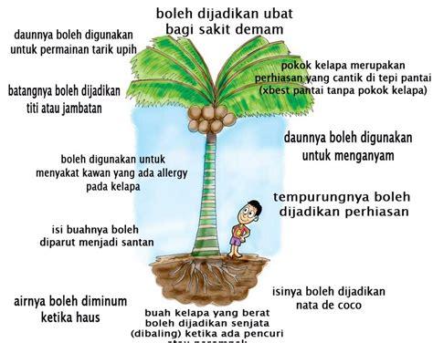 Amazing Boleh Tahu amazing ternyata ada banyak khasiat pokok kelapa yang tidak ramai tahu sila