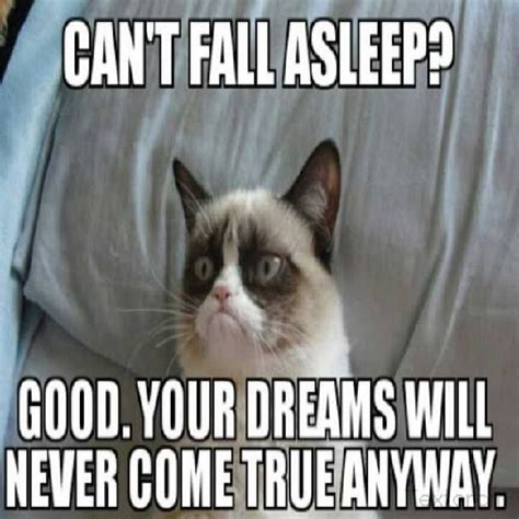 Grumpy Cat Sleep Meme - 503 best images about grumpy cat on pinterest gift
