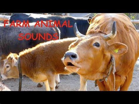real farm animal sounds    children