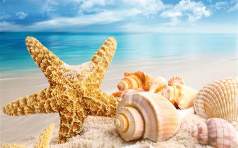 shell wallpaper shell full hd wallpaper and background image 2560x1600