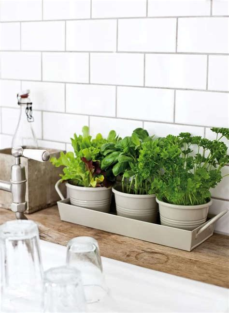 awesome indoor garden planting projects  start