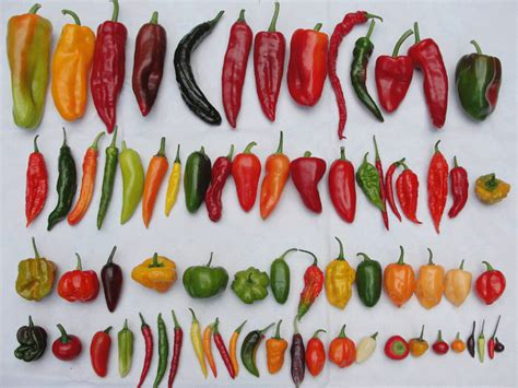 types of garden peppers chili peppers in history and in your garden digging in