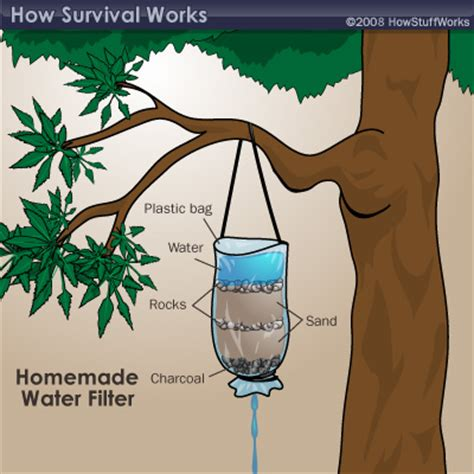 what to water your tree with jungle survival finding water jungle survival finding