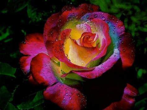 fiori fantastici fiori fantastici sfondi 10453
