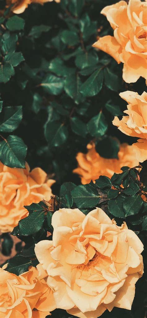 aesthetic wallpaper iphone wallpaper orange flower
