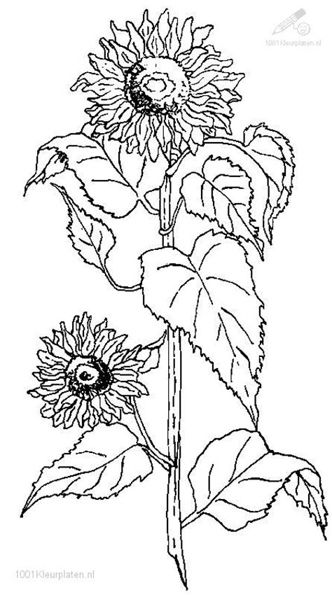 coloring pages of flowers and plants free flower with roots coloring pages