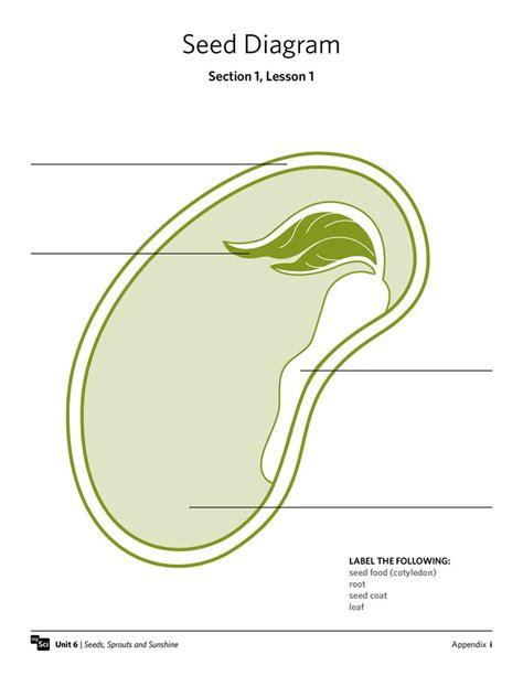 bean seed diagram image gallery seed diagram
