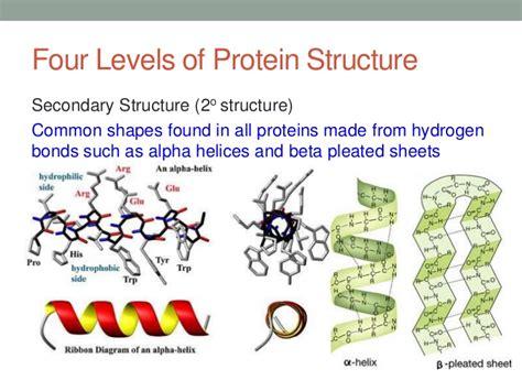 protein structure proteins slides
