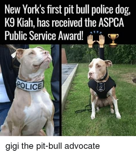 New Dog Meme - new york s first pit bull police dog k9 kiah has received