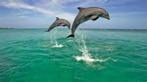 Home Kids Cove dolphin spotting in india travel india com