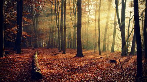 Imagenes Hd Bosques   rojo hojas de oto 241 o bosque 225 rboles hd wallpaper 10