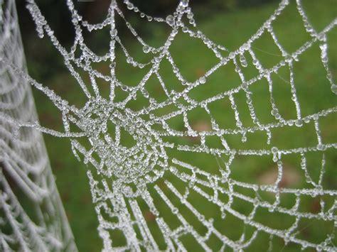 pattern nature web christmas blog make over envy of mr frost s web design